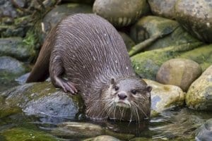 Copy of Otter