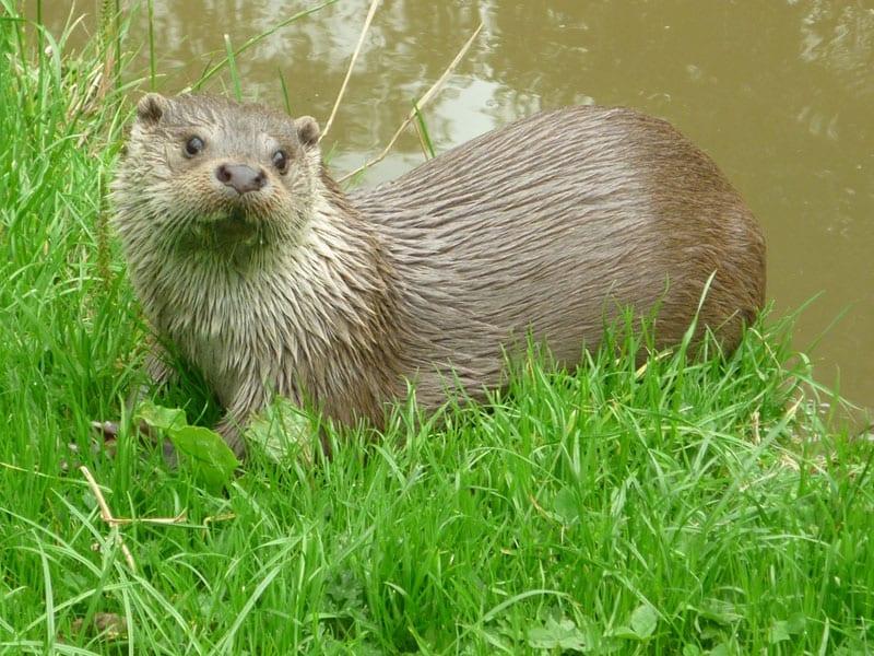Tamar Otters Park