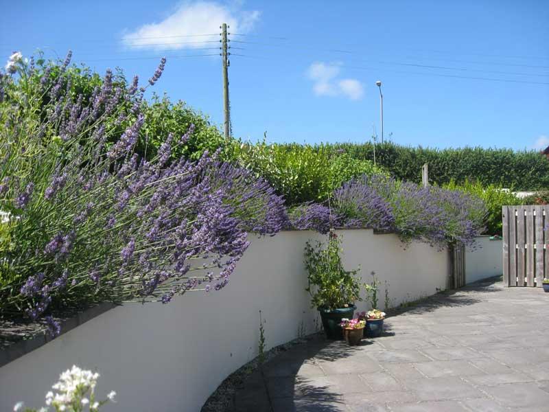 Trewhel-ju Side Garden