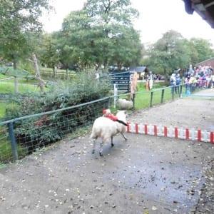 Big-Sheep-National-Race